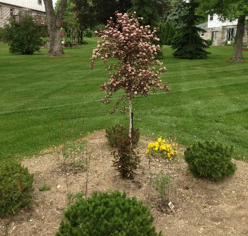 Professional Landscape Maintenance in Shelby TWP, Michigan