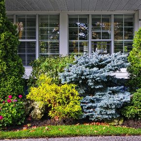 Shrub and Tree Pruning in Shelby Township, Michigan