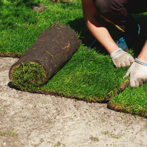 Sod Installation Services Greater Northern Detroit Area